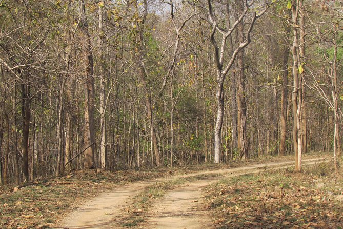 Pench Wildlife Safari