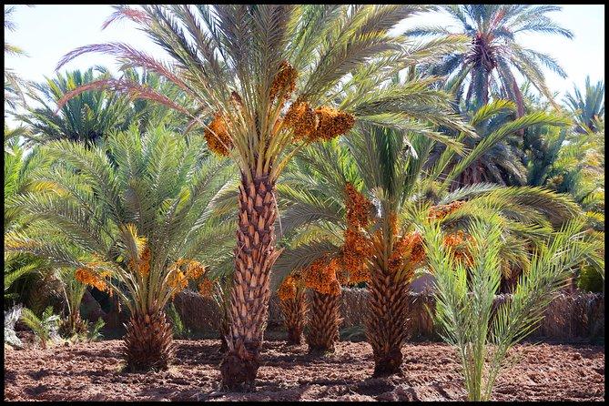 2 days Zagora Desert Tour from Marrakech