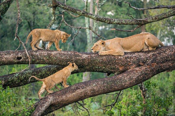 Manyara National Park Day Trip From Arusha