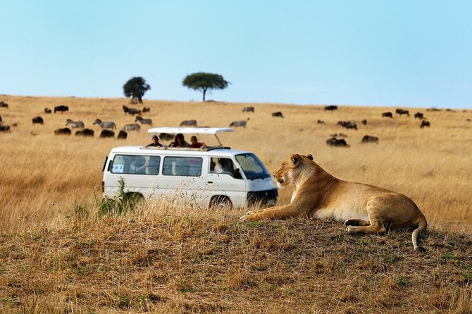 Nairobi Airport Layover Half Day Tour Nairobi National Park