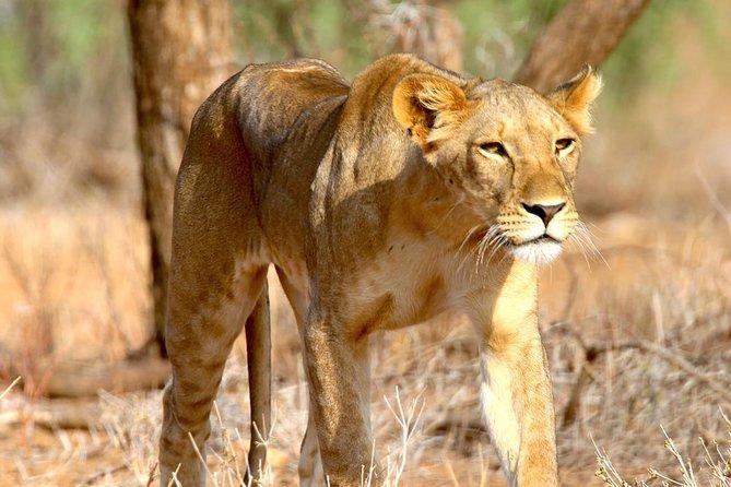 6 Days Safari- Mikumi NP,Udzungwa Mountains NP,and Selous GR