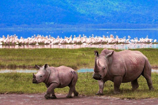 Arusha/ Moshi- Lake manyara- Serengeti plains- Ngorongoro crater- Moshi