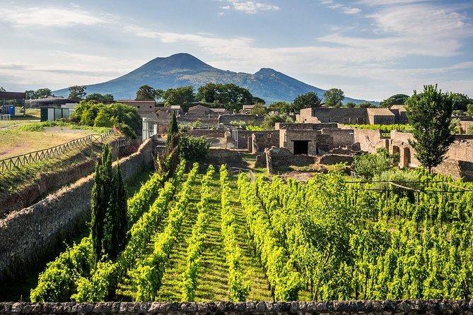 Pompeii & Wine Tour - ALL INCLUSIVE