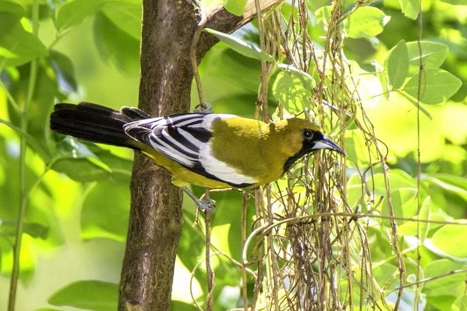 Rocklands Bird Sanctuary & City Highlights plus Shopping from Grand Palladium
