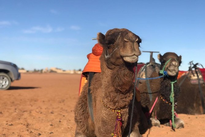 4 Days Tour from Marrakech to Fes via the Sahara Desert & Berber Tents