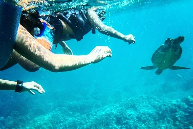 Underwater Video Snorkel w/ Seas Turtles photo 7