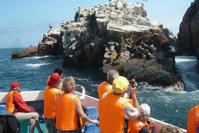 Paracas Full Day (Ballestas Islands)