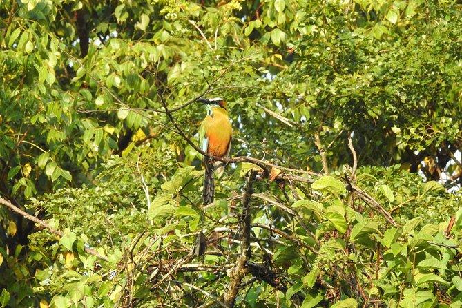 Birdwatching Riviera Maya