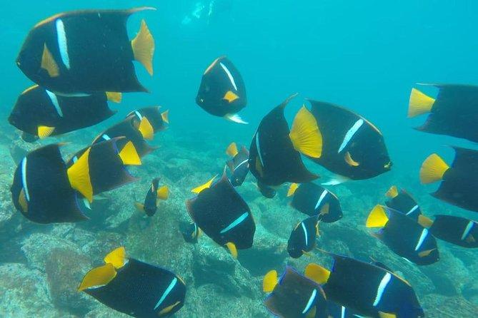 Pinzon Island / Palmitas or La Fé Bay snorkelling and fishing excursion