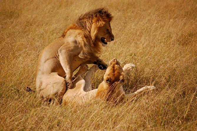7 Days Maasai Mara, Naivasha, Nakuru & Amboseli Safari