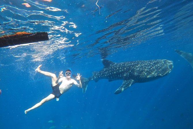 Cebu Whaleshark Tour