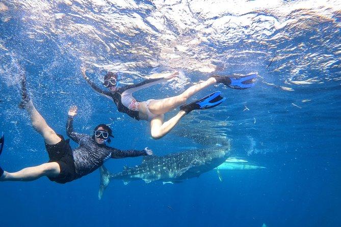 Cebu Oslob Whalesharks, Sumilon & Kawasan Waterfalls Tour