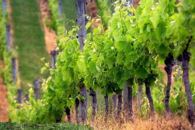 Private Chianti Wine Tour