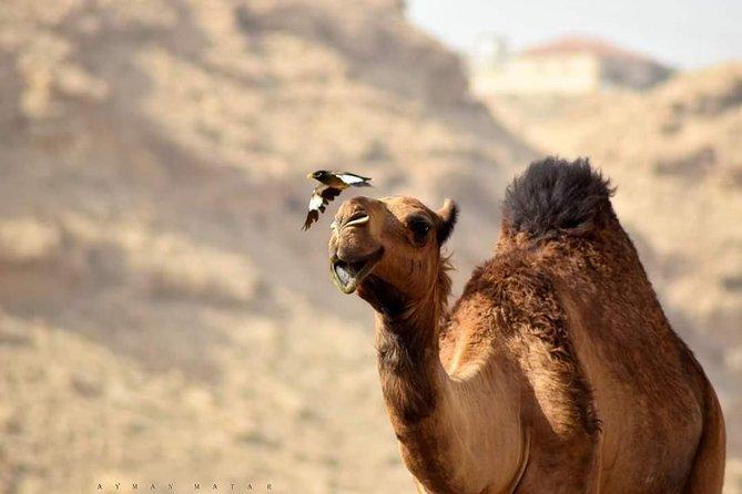 3 Days 2 Nights From Marrakech to Merzouga Sahara Desert