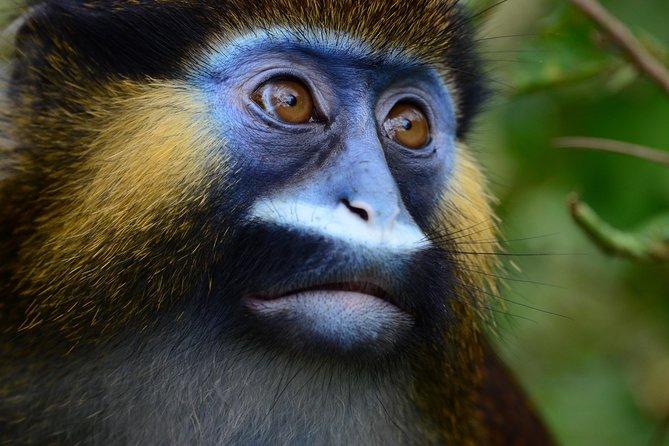 8 Days Safari Tour in Gabon and Congo