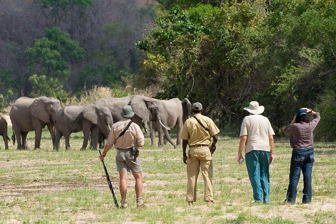 Discover the Wonders of Selous Game Reserve - 4 Days