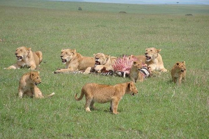 6 Days Enchanting Serengeti - Mid Range Safari