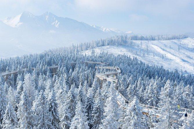 From Kraków: Slovakia Treetop Walk and Bachledka Ski