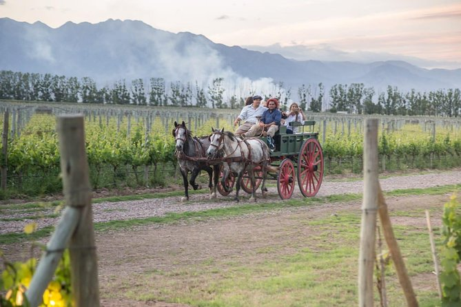 Horseback riding, tasting and lunch in the cellar
