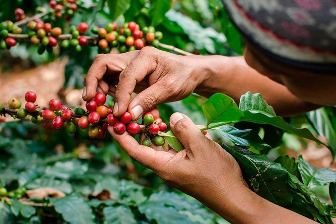 The REAL COFFEE Tour (BIGGEST COFFEE FARM ever) from MEDELLIN