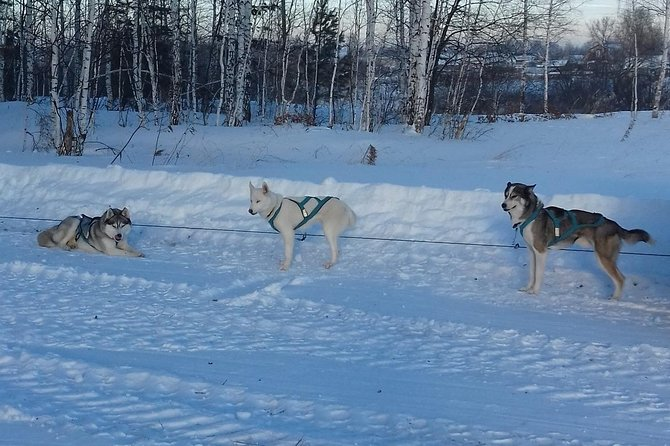 Winter trip to fabulous world of Husky. Riding, photos and hugs with sled dogs.