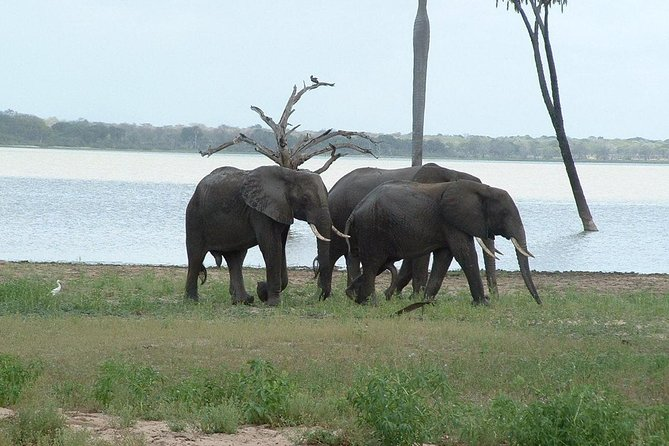 2 Days Morogoro- Selous Game Reserve(Nyerere national park)