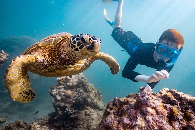 Turtle and Ray combo tours Rarotonga, Cook Islands , Photography Charlotte Piho