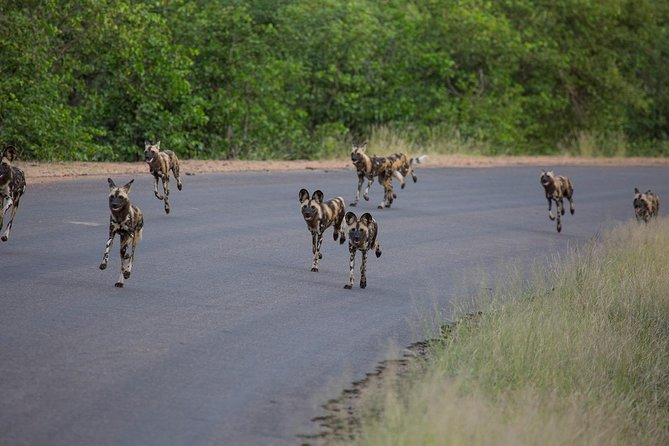 Kruger National Park 3 Nights Tour - Love Nature photo 8