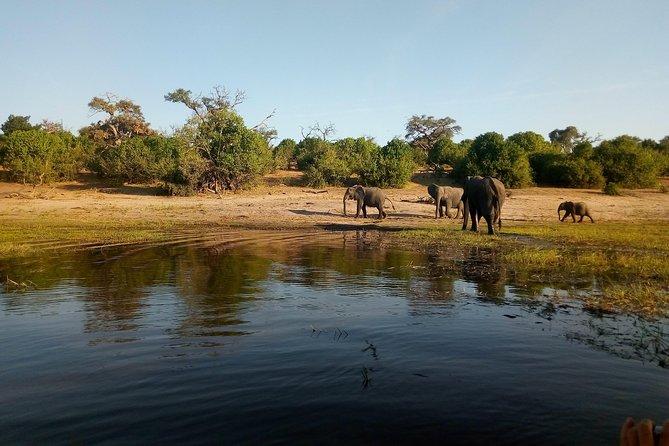 Victoria Falls: Chobe National Park Private Tour