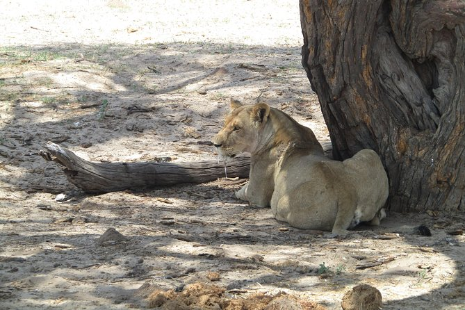 Jam Packed African Experience: Victoria Falls, Livingstone and Chobe Park