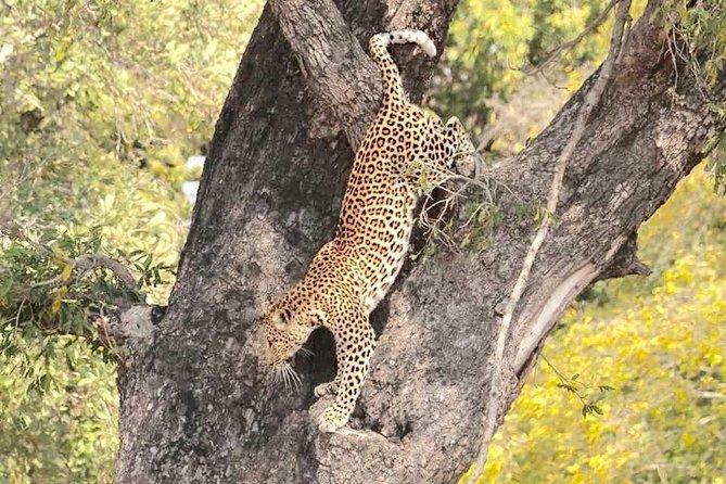 3 Day Budget Kruger National Park Safari - From Johannesburg
