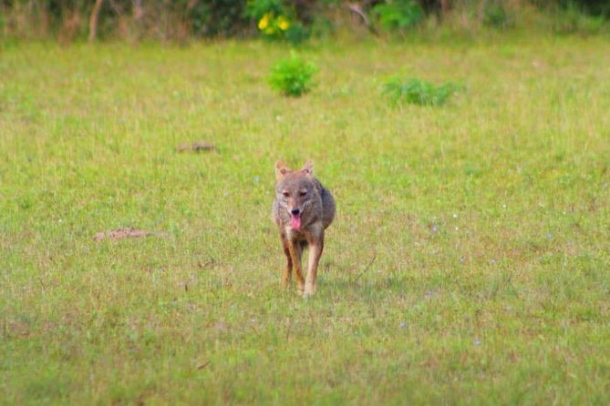 Safari at Wilpattu National Park from Negombo (All inclusive day tour) photo 22