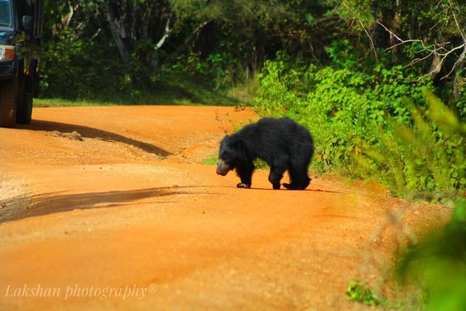 Safari at Wilpattu National Park from Negombo (All inclusive day tour) photo 41