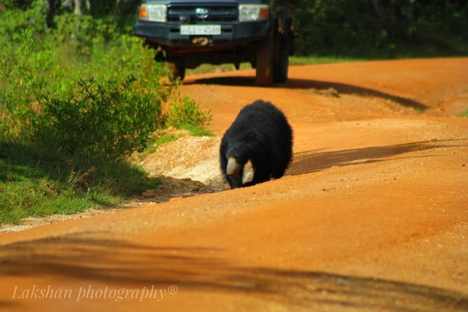 Safari at Wilpattu National Park from Negombo (All inclusive day tour) photo 8