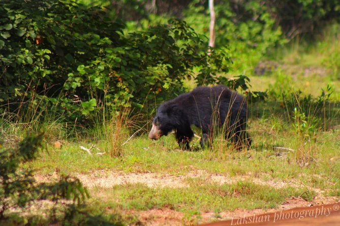 Safari at Wilpattu National Park from Negombo (All inclusive day tour) photo 13