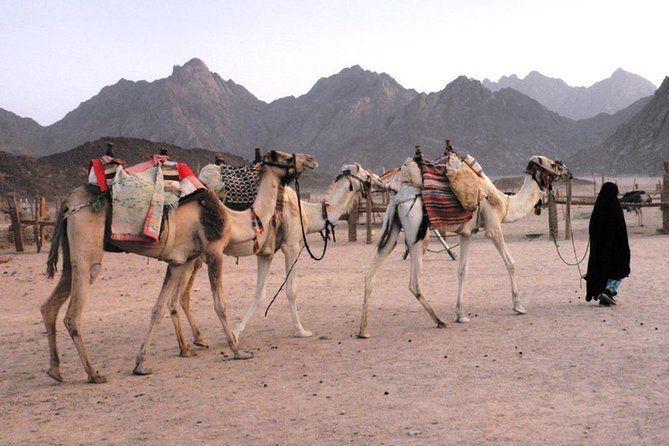 Quad Bike Safari Adventure from Sharm el Sheikh