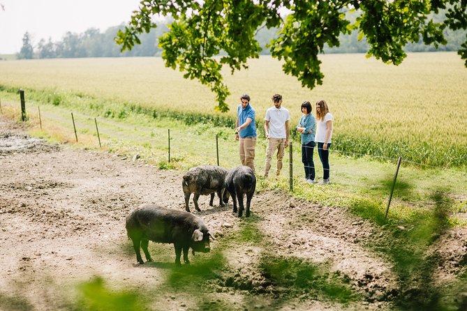 Parma Lowlands Private Half-day Tour with Farm Visit
