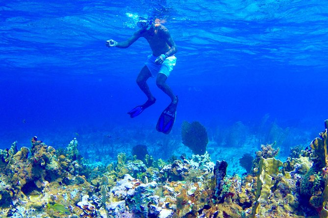 Glass Bottom Boat Ride/Snorkeling/Booby Cay Island from Negril