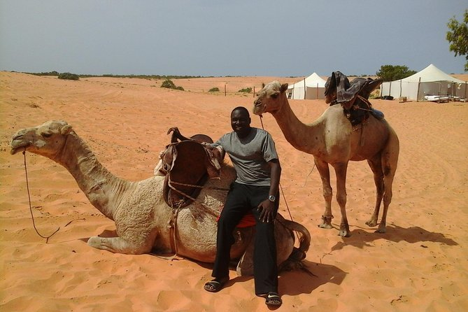 Camel ride in the middle of the desert