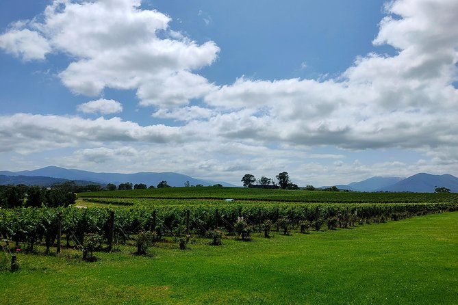 Yarra Valley Cellar Door and Gin Day photo 1