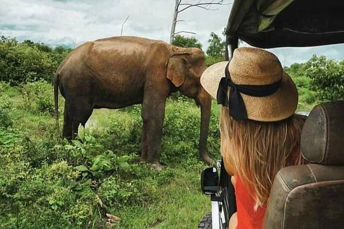 Udawalawe National Park Safari With Traveling Mirissa / waligama To Ella