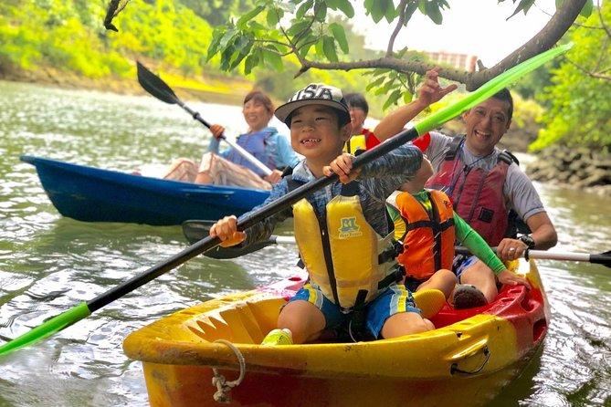 Enjoy nature! Mangrove kayak tour!