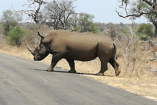 Kruger National Park. 2 Days Best Ever Safari from Cape Town