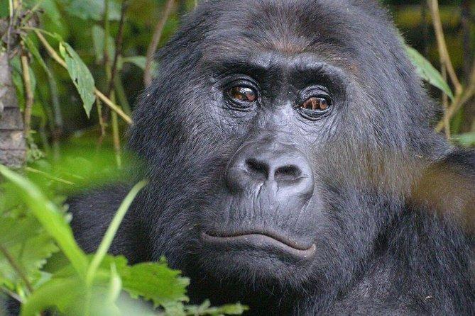 10 Days Uganda Adventure & Gorilla Safari
