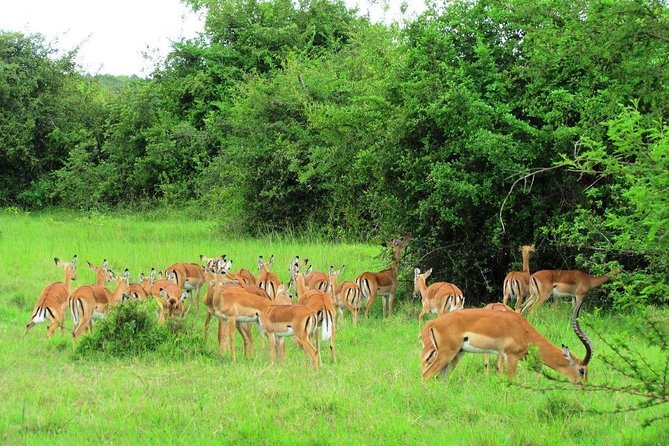 Lake Mburo National Park Wild Safari in Uganda