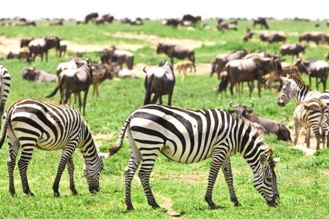 6 Days the best of Kenya wildlife safari