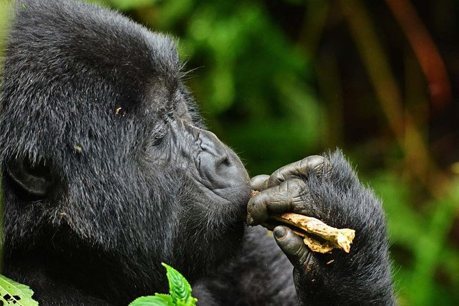 14 days Gorillas, Game and Masai Mara Safari
