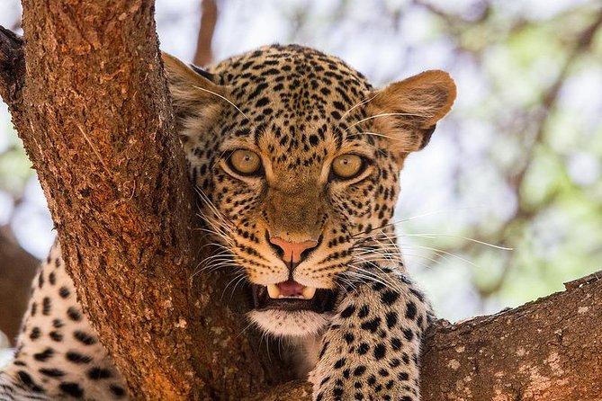 3 Days Masai Mara Budget Group Safari