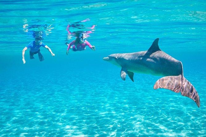 Swim with Dolphin in Sataya Reef Over Night Sea Trip - Marsa Alam