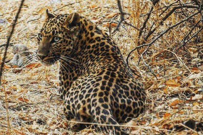 Jhalana Leopard Safari+Abhaneri Step Well Tour From Jaipur Including Car & Entry
